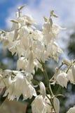 Blommor och utskjutande sommarträdblad Arkivfoton