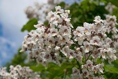 Blommor och utskjutande sommarträdblad royaltyfri fotografi