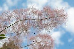 Blommor och utskjutande sommarträdblad fotografering för bildbyråer