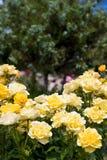 Blommor och utskjutande sommarträdblad Royaltyfri Bild