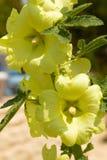 Blommor och utskjutande sommarträdblad Arkivfoto