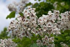 Blommor och utskjutande sommarträdblad Royaltyfri Foto