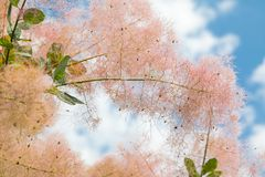 Blommor och utskjutande sommarträdblad Arkivbild