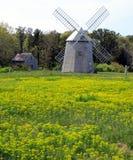 Blommor och väderkvarn, Cape Cod, Massachusetts, USA Royaltyfri Fotografi