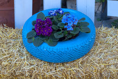 Blommor och växten i gammalt gummihjul målade pastellfärgad färg Royaltyfri Foto
