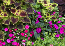Blommor och växter Royaltyfri Bild