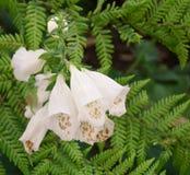 Blommor och växter arkivbild