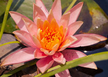 Blommor och växter royaltyfria foton