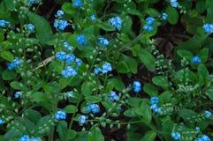 Blommor och växter fotografering för bildbyråer