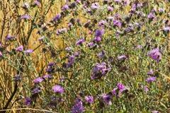 Blommor och växter av sydliga Italien arkivbilder