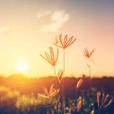 Blommor och växter i solnedgång Royaltyfri Bild
