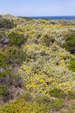 Blommor och vegetation i stranden i Almograve Arkivfoton