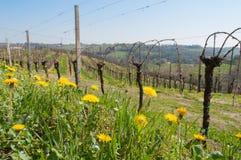 Blommor och vingård Royaltyfri Foto