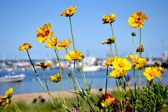 Blommor och yachter på bakgrunden Royaltyfria Bilder