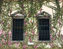 Blommor omger fönstret arkivfoton
