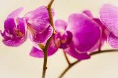 Blommor orkidé som isoleras, blomma, natur, växt, kronblad Royaltyfri Fotografi
