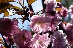 Blommor på bakgrunden av blå himmel royaltyfri bild