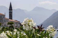Blommor på bakgrunden av klockatornet av St Nicholas Church i Perast Arkivbilder
