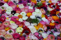 Blommor på bevattna arkivbild