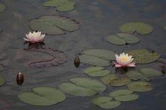 Blommor på bevattna fotografering för bildbyråer