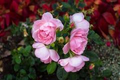 Blommor på blomsterrabatten fotografering för bildbyråer