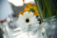 Blommor på bordlägga Arkivbilder
