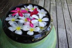 Blommor på brunnsorten Fotografering för Bildbyråer