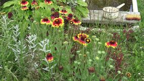 Blommor på dachaen stock video
