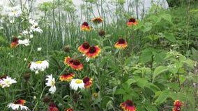 Blommor på dachaen arkivfilmer