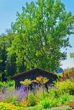 Blommor på den inre gården av Yverdon i Schweiz Arkivbilder