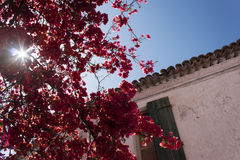 Blommor på den Parga staden, Parga Grekland Arkivfoto