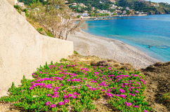 Blommor på den sandiga stranden med klar blå himmel, Grekland Royaltyfria Bilder