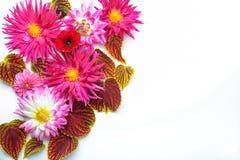 Blommor på den vita bakgrunden Royaltyfria Foton