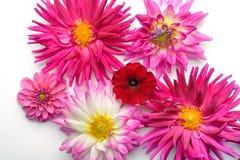 Blommor på den vita bakgrunden Royaltyfri Bild