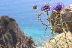 Blommor på det klippbrants-. Fotografering för Bildbyråer
