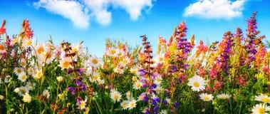 Blommor på en äng och den blåa himlen Royaltyfri Bild
