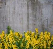 Blommor på en bakgrund av betongväggen för bakgrund Bakgrund arkivfoto