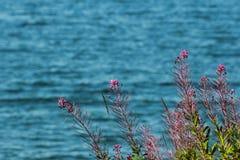 Blommor på en bakgrund av vinkar Royaltyfria Bilder