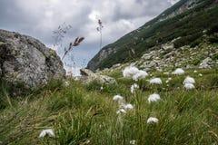 Blommor på en berglutning Arkivbild