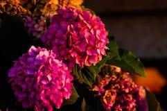 Blommor på en blomsterhandlare Arkivfoton