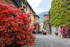 Blommor på en gata av Bellagio Royaltyfri Bild