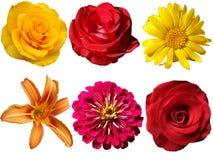 Blommor på en genomskinlig bakgrund Fotografering för Bildbyråer