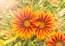 Blommor på en solig dag Arkivbild