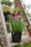 Blommor på en stege Fotografering för Bildbyråer