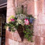 Blommor på en vägg Royaltyfri Bild