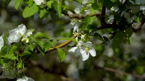 Blommor på ett blomningträd arkivfilmer