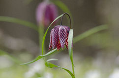 Blommor på ett fält Fotografering för Bildbyråer