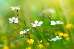 Blommor på fältet Royaltyfri Fotografi