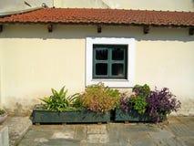 Blommor på fönstret Fotografering för Bildbyråer