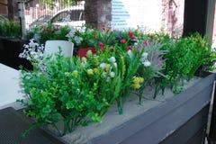 Blommor på fönstret, gräsplaner Arkivbild